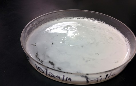 Yotopia! Biotech Makes Yogurt In-house!
