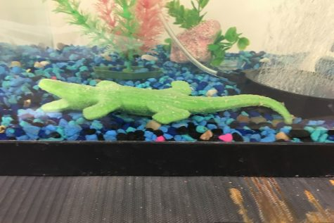 Alligator in the Fish Tank